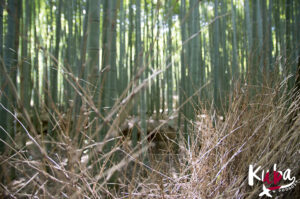 Słynny Bamboo Forest