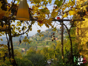 Bergamo - winnice na przedmieściach miasta