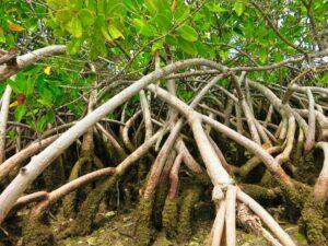 Everglades - namorzyny